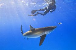 Blue ocean strategy Sharks in a Blue Ocean Dont Bite