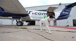 Blue Ocean Strategy Pet Airways